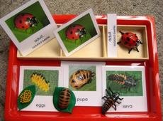 laminated cards and objects sit in a red tray