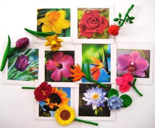 A range of flowers scattered atop cards