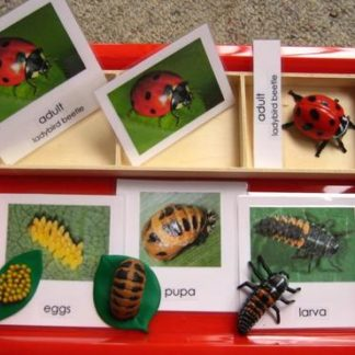 A red tray showing the ladybeetle in all stages of its lifecycle with cards and objects